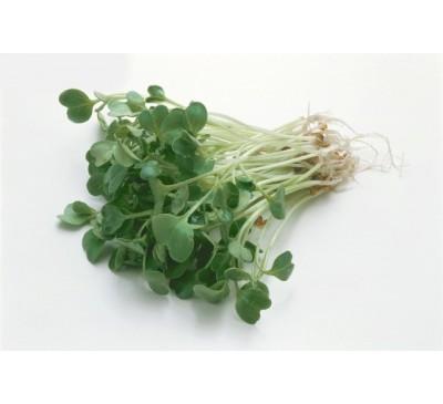 Seminte Broccoli Calabrese 100gr