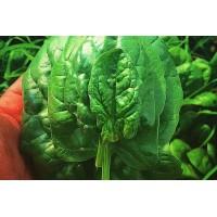 Spanac cules frunza cu frunza (500 g.)